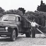 1950 International Truck