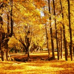 Autumn in Tumut: Beautiful Picture