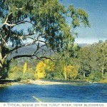 Tumut River at Blowering in the 1950s